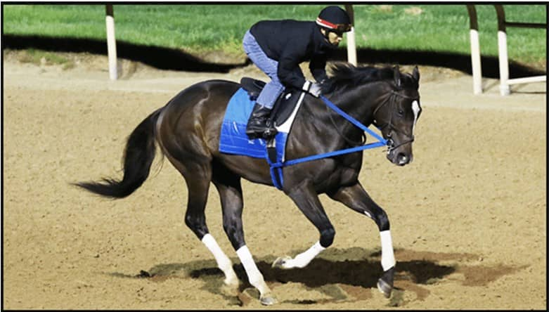 Kentucky Derby Runners with Poker Names
